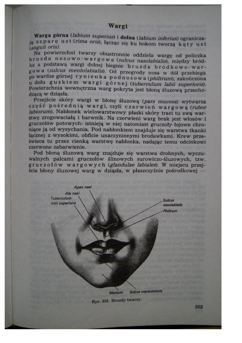 pituchowa anatomia pdf chomikuj